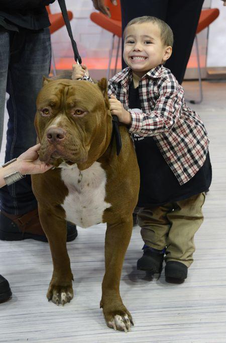 LITTLE BOY, BIG DOG